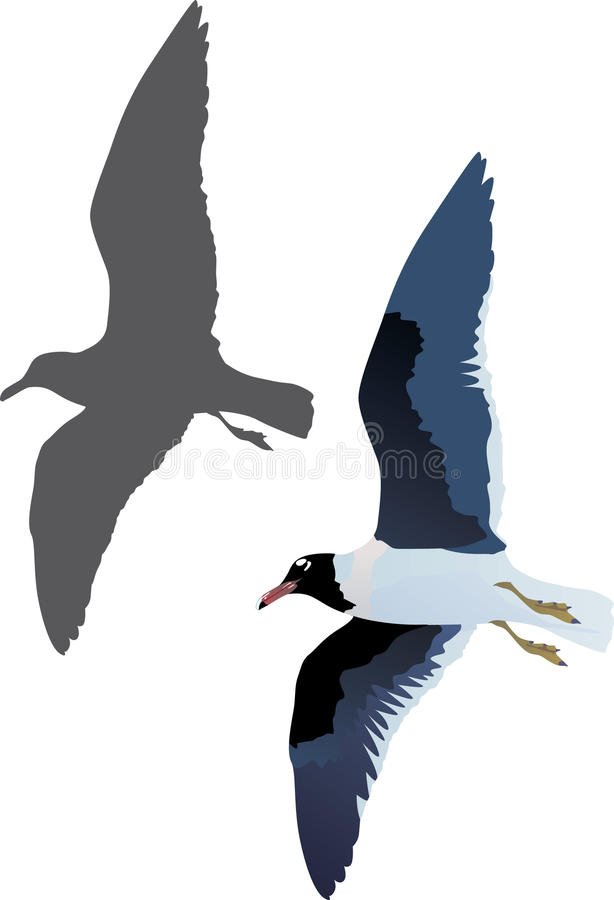 Gull and shadow isolated on white. Illustration with gull and shadow isolated on white background royalty free illustration