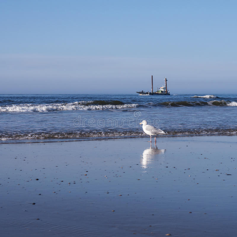 Download Gull and ship at the beach stock image. Image of travel - 36881873