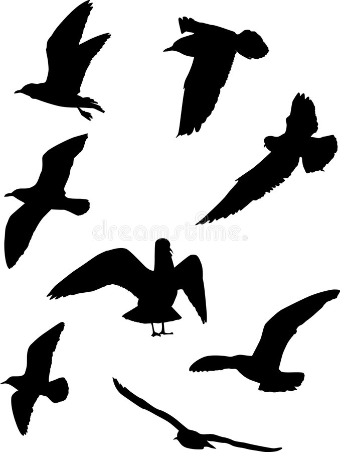 Gull silhouette collection. Illustration with gull silhouette collection on white stock illustration
