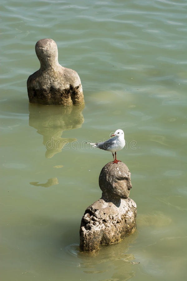 Gull sitting on a head of statue in water stock photos