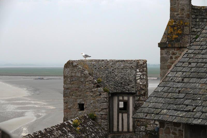 Gull sulla parete medievale a Mont Saint Michel in Francia fotografie stock libere da diritti