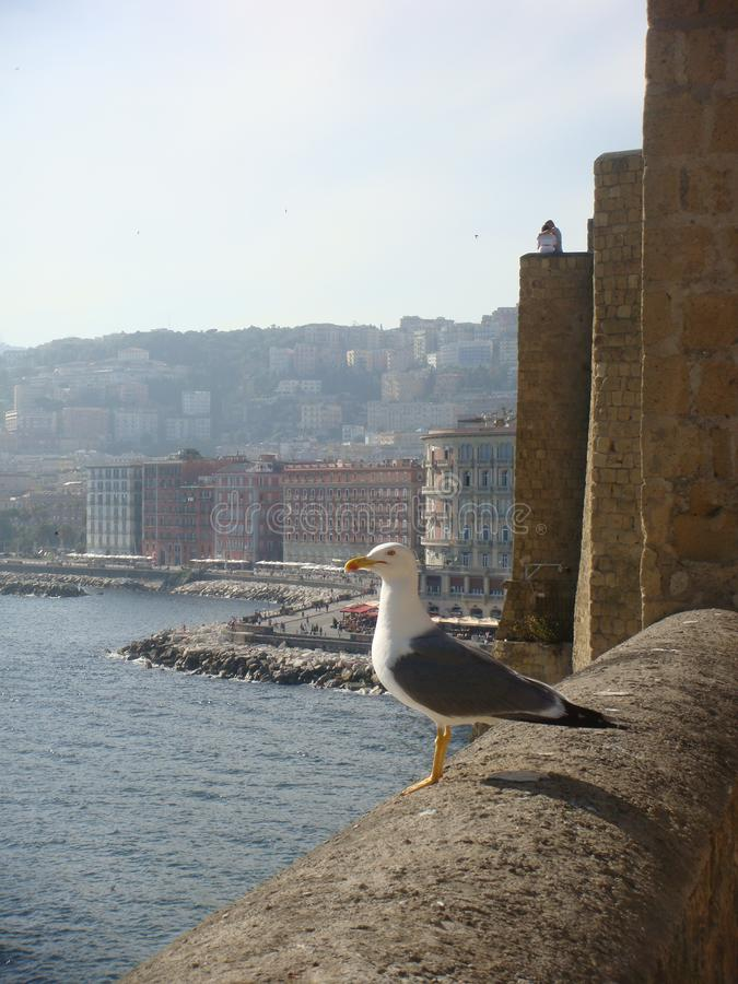 A gull supported on the boundaries of a castle with sight sea to Naples in Italy stock images
