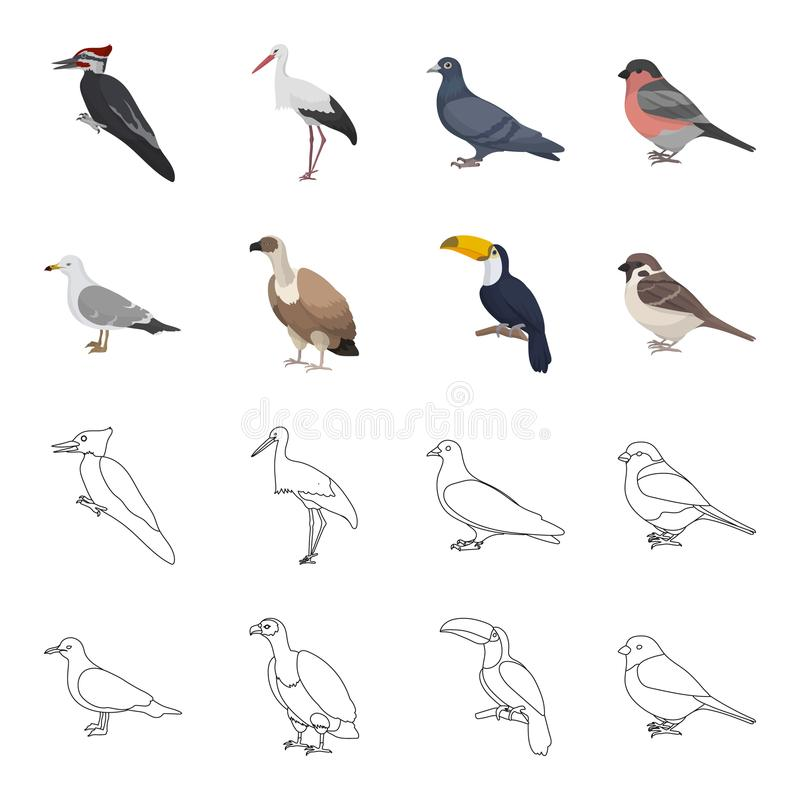 Gull, toucan and other species. Birds set collection icons in cartoon,outline style vector symbol stock illustration web. Gull, toucan and other species. Birds vector illustration