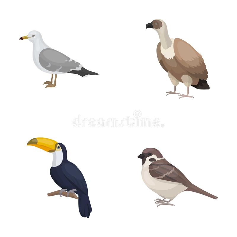 Gull, toucan and other species. Birds set collection icons in cartoon style vector symbol stock illustration web. Gull, toucan and other species. Birds set stock illustration