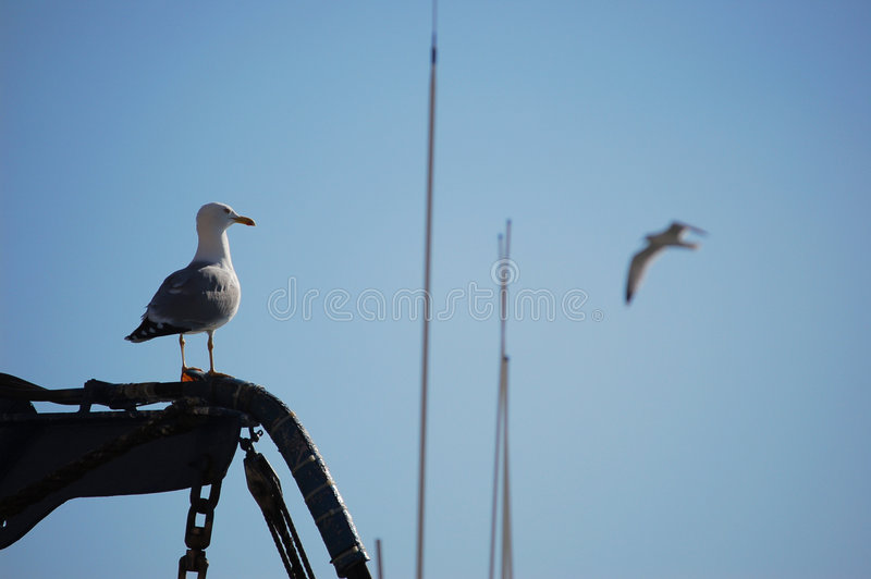 Download Gull watching in a boat stock photo. Image of monitoring - 995834