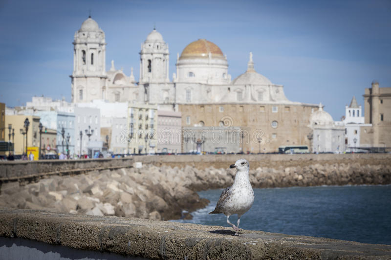 A gull watching in Paseo Campo del Sur Cadiz Cathedral called O royalty free stock image
