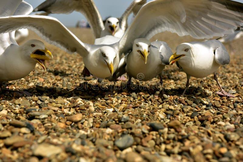 Download Gull stock image. Image of bathing, gull, gulls, ndove - 93298679