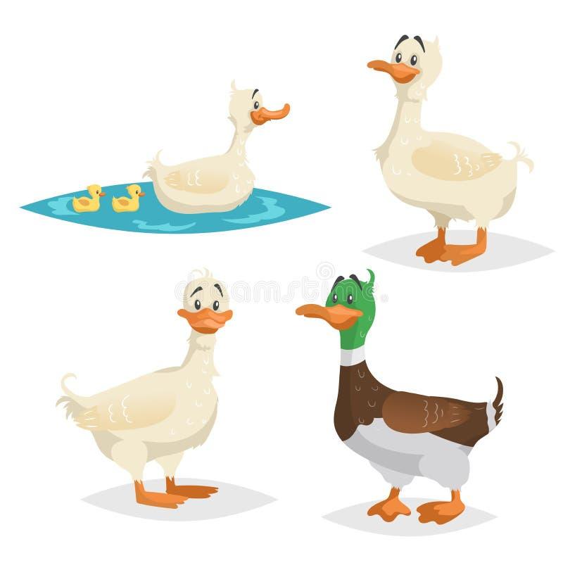 Gullig anduppsättning Stående poserar att simma som är olikt, lantgården och den lösa fågelsamlingen Vuxen andkvinnlig och manlig royaltyfri illustrationer