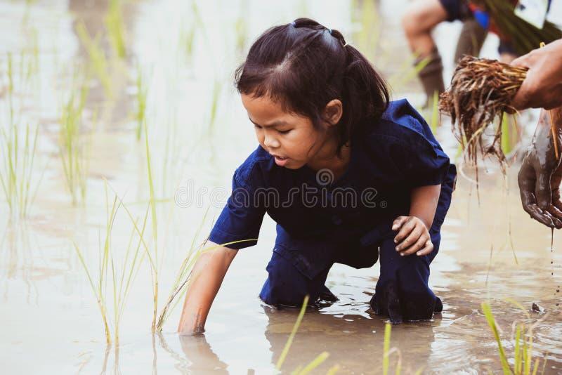 Gullig asiatisk barnflicka som lär att plantera ris i risfältet arkivbild