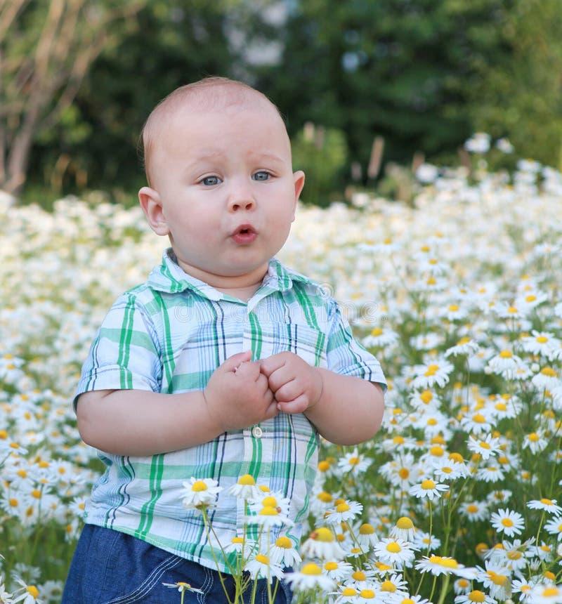 Gullig barnpojke i fältet royaltyfri foto