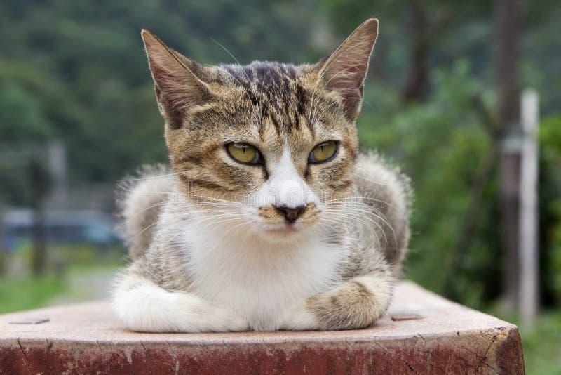 Gullig brun katt på bänk arkivbilder