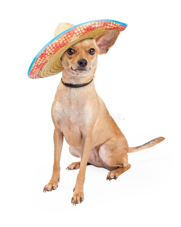 Gullig Chihuahuahund som bär den mexicanska sombreron arkivbild