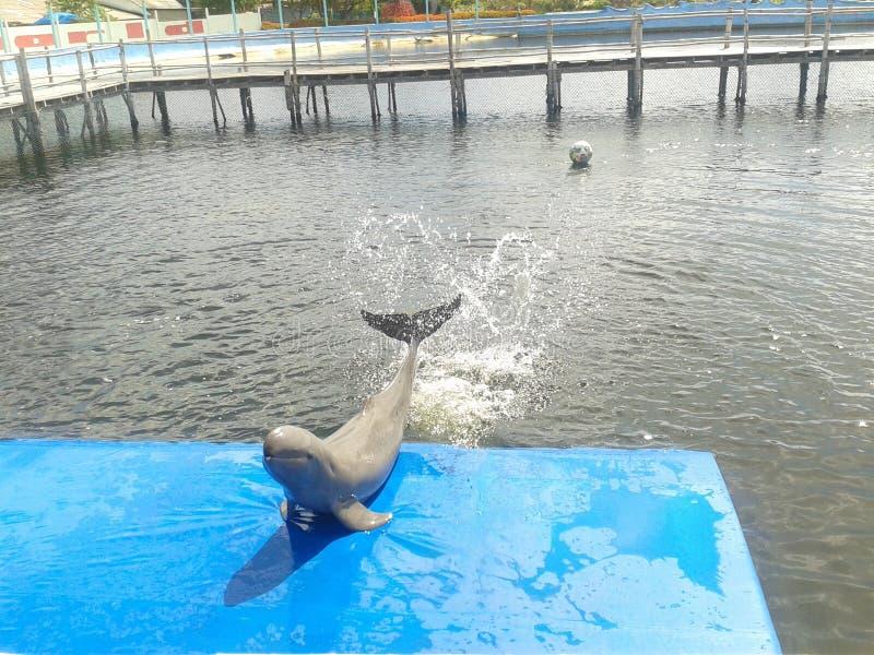 Gullig delfin i pölen royaltyfri foto