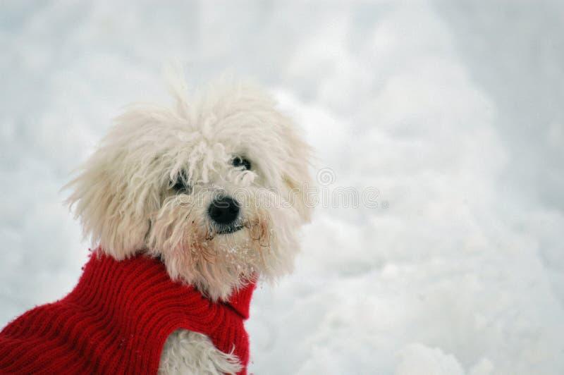 gullig dogie arkivfoto