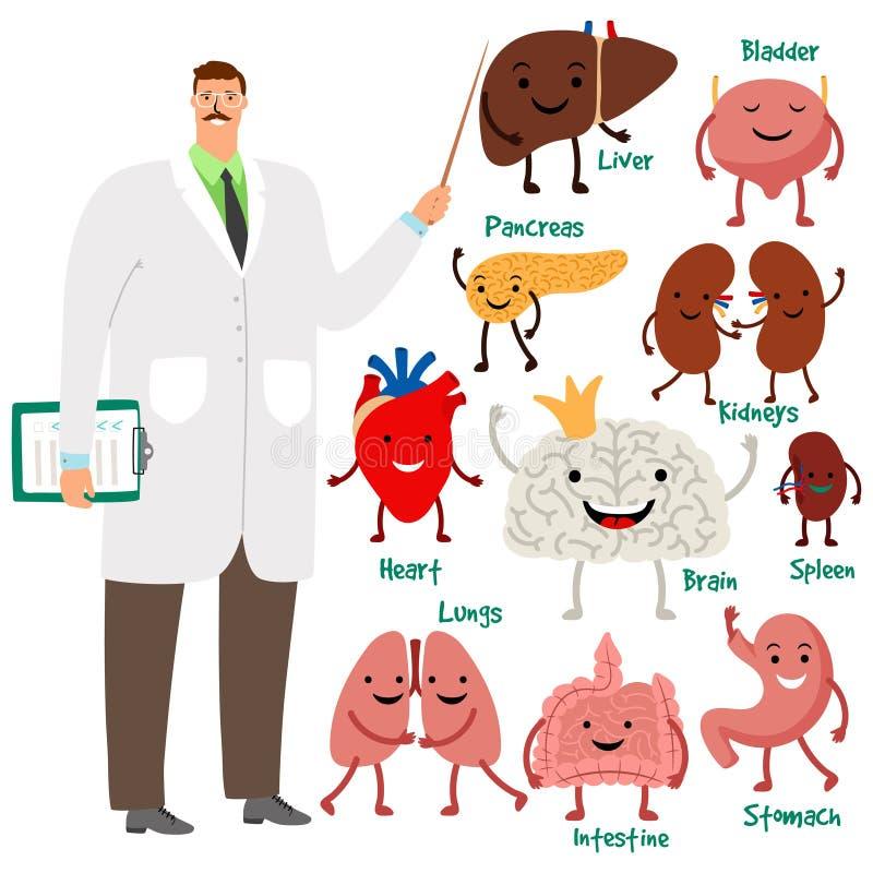 Gullig doktor och mänsklig vektorillustration för inre organ stock illustrationer