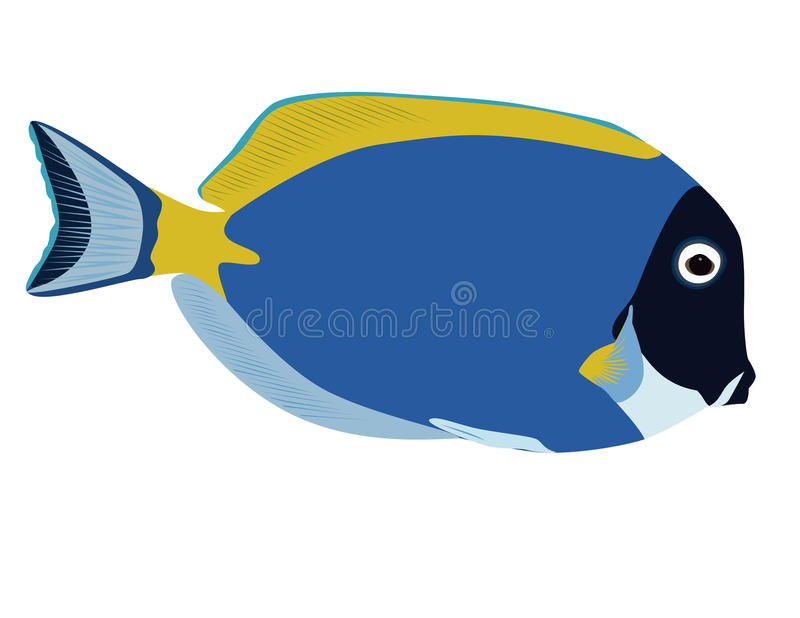 Gullig färgrik leucosternon för Acanthurus för skarp smak för blått för fiskvektorpulver arkivfoto