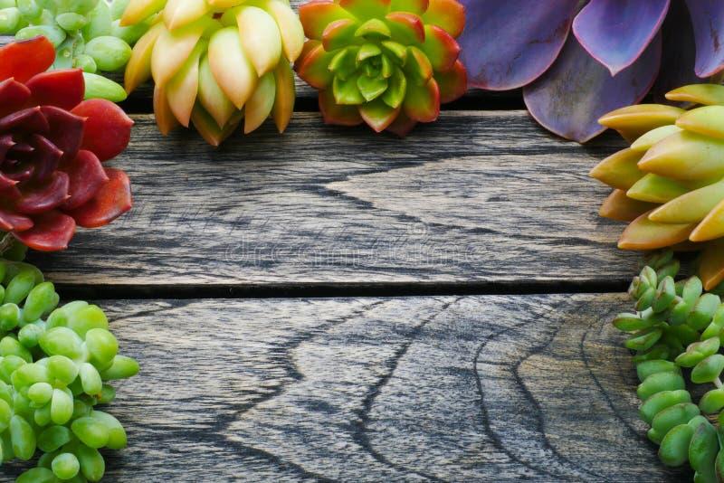Gullig färgrik suckulent växt för bästa sikt med kopieringsutrymme för text på trätabellbakgrund royaltyfria bilder