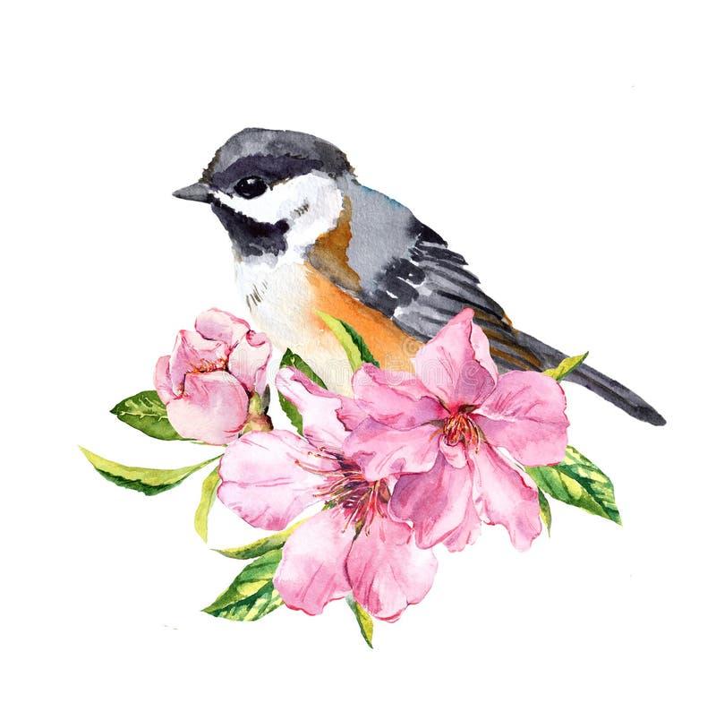 Gullig fågel i den körsbärsröda blomningen, sakura blommor i vårtid Vattenfärg fattar vektor illustrationer
