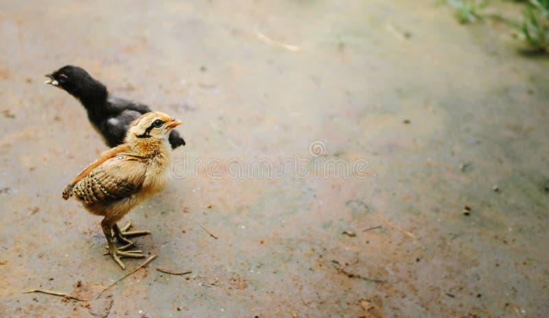 Gullig fågelunge som står minimum gyttja arkivbilder