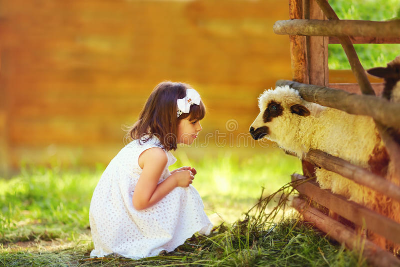 Gullig flicka, matande lamm för unge med gräs, bygd arkivfoto