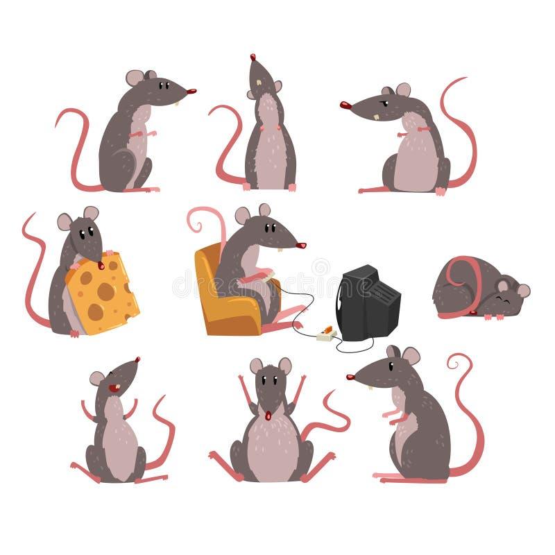 Gullig grå musuppsättning, roligt gnagaretecken i olika lägevektorillustrationer vektor illustrationer