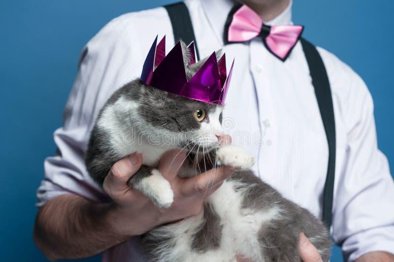 gullig grå och vit katt i rosa skinande krona på manhänder på blå bakgrund fotografering för bildbyråer