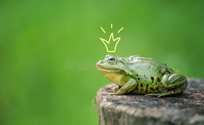 Gullig grodaprinsessa eller prins Padda målad krona, skjuta som är utomhus- fotografering för bildbyråer