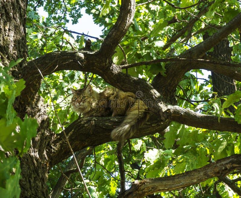 Gullig hårig katt som sitter på ett grönt träd med sidor och vilar på en solig sommarvårdag arkivbild