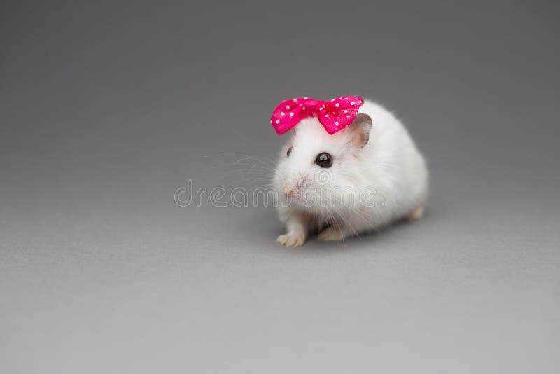 Gullig hamsterflicka med den rosa pilbågen på valentindag på grå bakgrund fotografering för bildbyråer