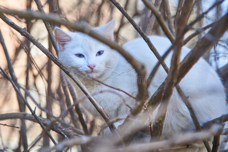 Gullig hemlös katt som sitter på ett träd i en vår arkivbild