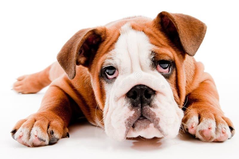 gullig hund arkivfoton