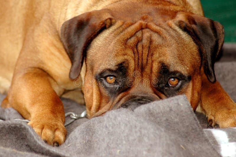 gullig hund royaltyfri foto