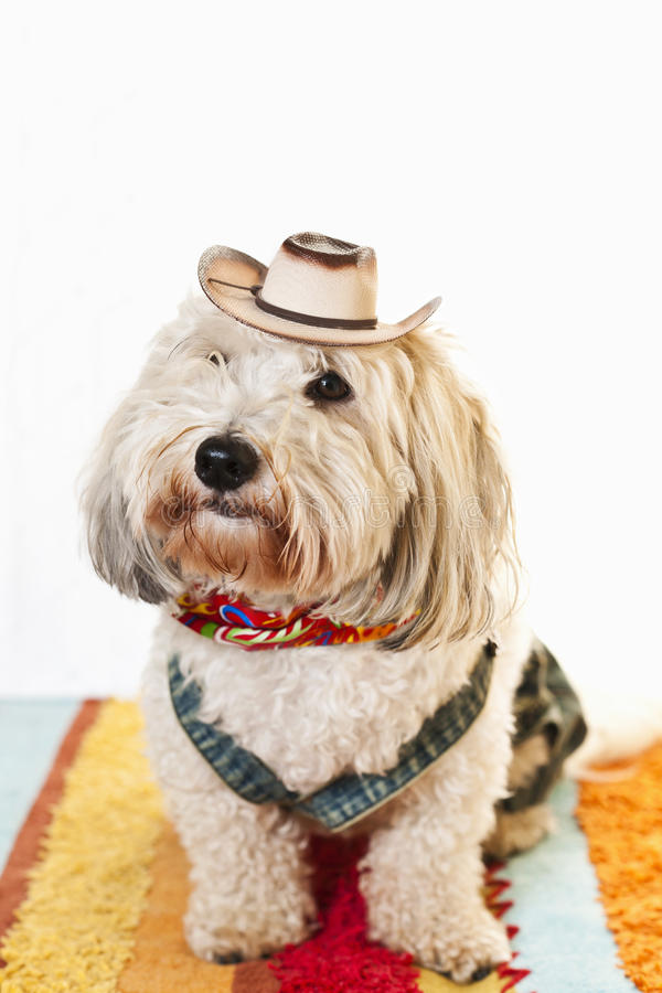 gullig hund för dräktcowboy royaltyfri bild