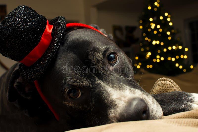 gullig hund för jul royaltyfri fotografi