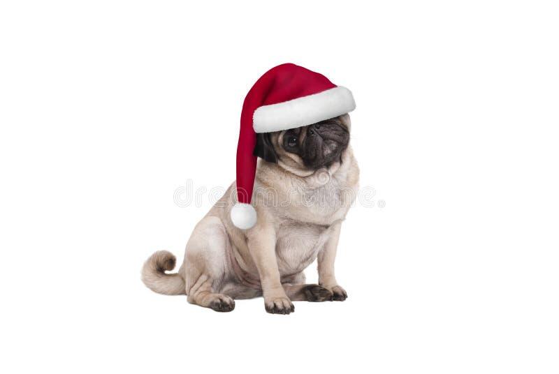 Gullig hund för julmopsvalp med jultomtenhatten som ner sitter fotografering för bildbyråer