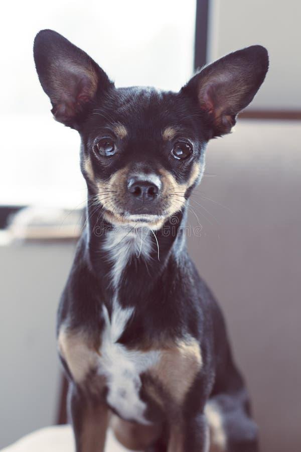 Gullig hund i en parkera arkivfoto