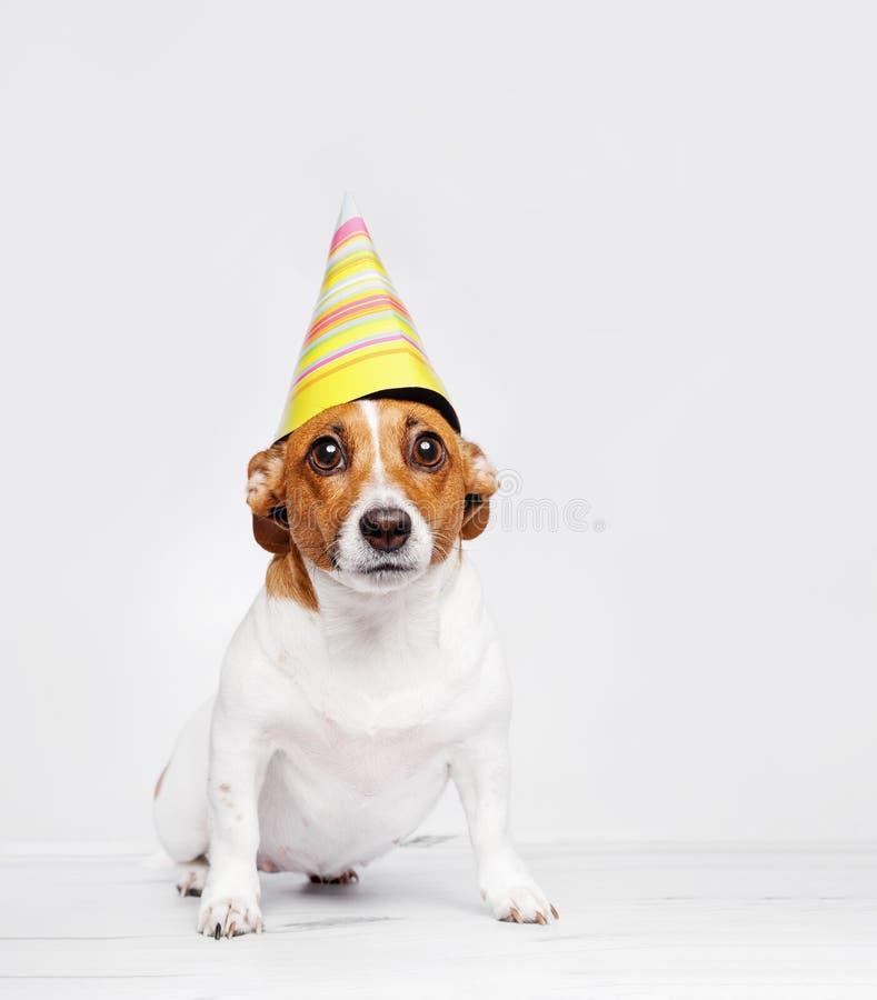 Gullig hund i karnevalpartihatt som firar födelsedag royaltyfri foto