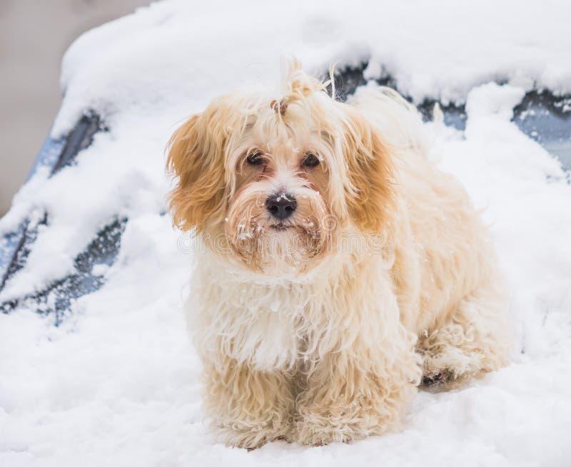 Gullig hund i snö fotografering för bildbyråer