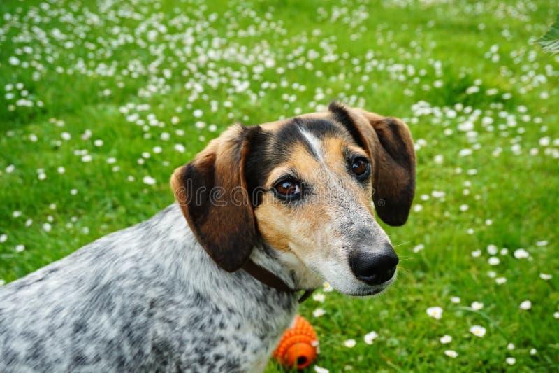 Gullig hund i trädgård royaltyfri foto