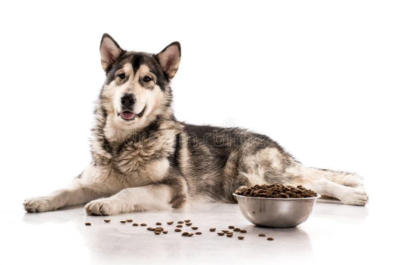 Gullig hund och hans favorit- torra mat på en vit bakgrund arkivbilder