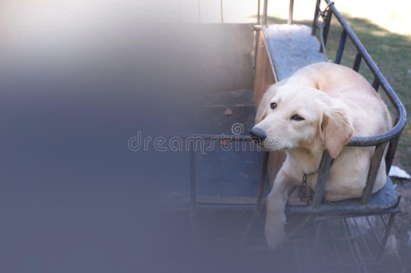 Gullig hund på en sidecarmotorcykel royaltyfria bilder