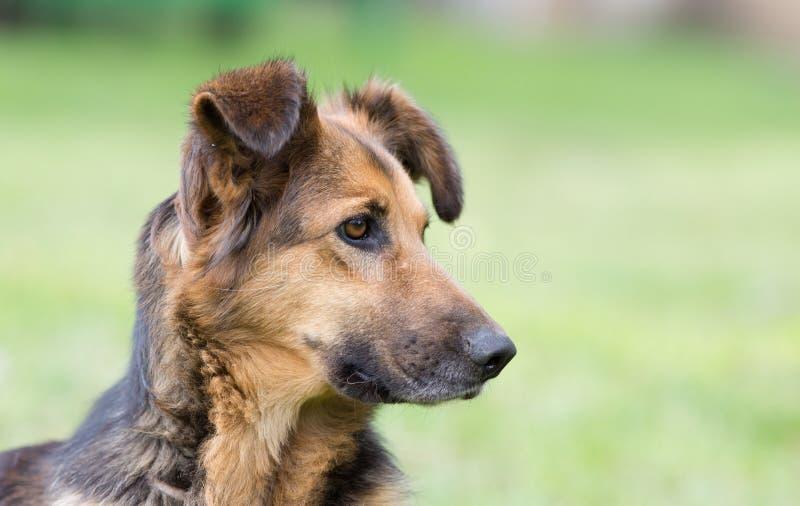 gullig hundstående arkivbild