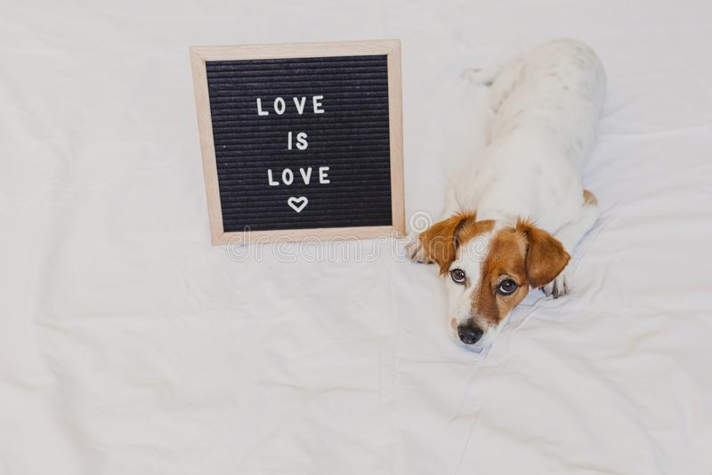 Gullig hundstålar russell som hemma ligger på säng Bokstavsbrädet förutom med meddelandeFÖRÄLSKELSE ÄR FÖRÄLSKELSE Stolthetmånade royaltyfri foto