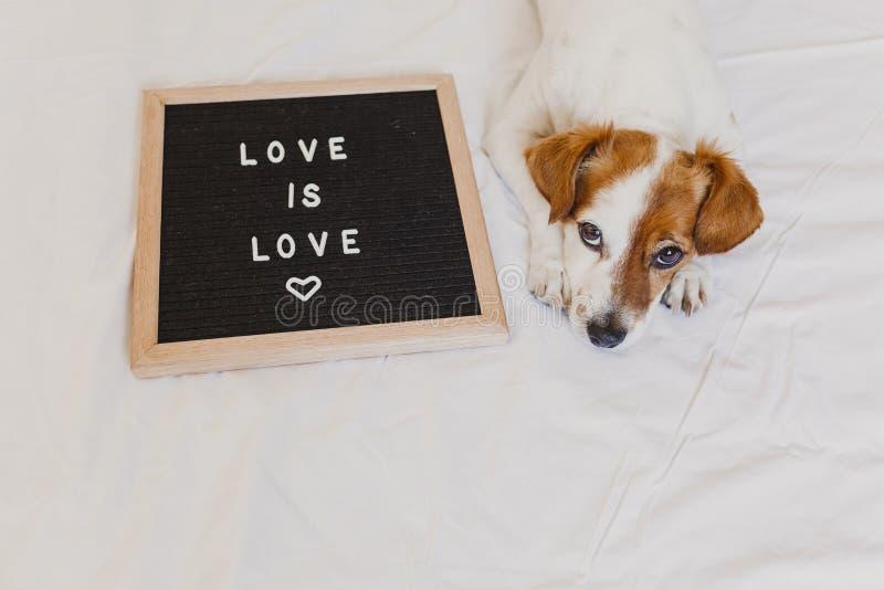 Gullig hundstålar russell som hemma ligger på säng Bokstavsbrädet förutom med meddelandeFÖRÄLSKELSE ÄR FÖRÄLSKELSE Stolthetmånade arkivbilder