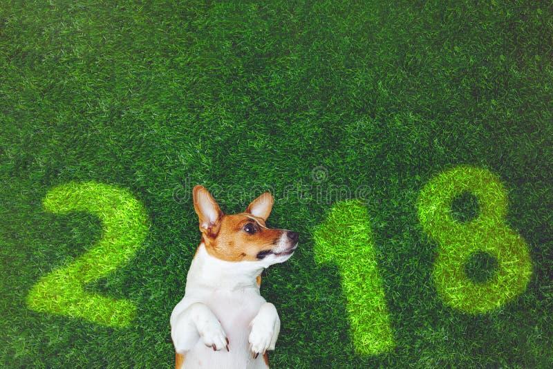 Gullig hundstålarrussel terrier som ligger på grönt gräs fotografering för bildbyråer