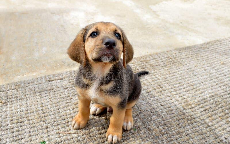 gullig hundvalp arkivbilder