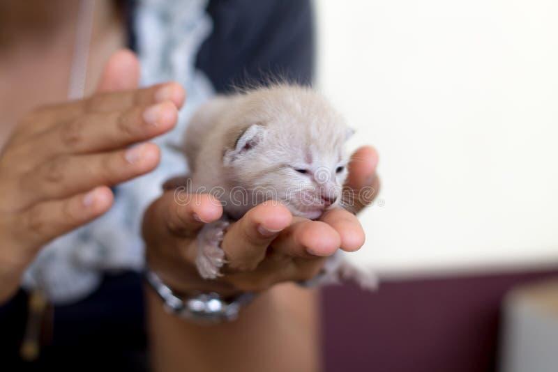 Gullig inhemsk nyf?dd kattunge arkivfoton