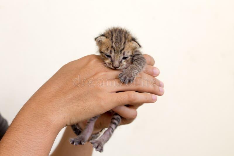 Gullig inhemsk nyf?dd kattunge fotografering för bildbyråer