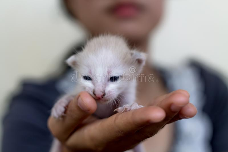 Gullig inhemsk nyf?dd kattunge arkivbilder