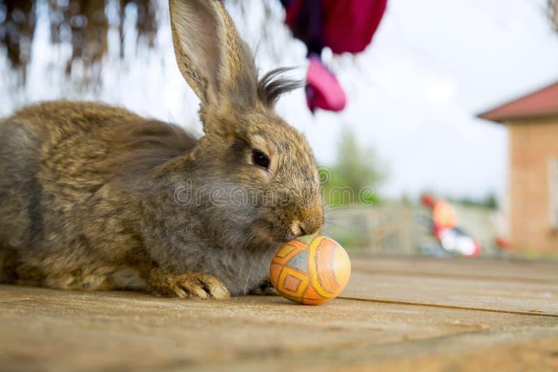 Gullig kanin i trädgården arkivfoton
